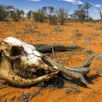 klimaticheskaya-katastrofa