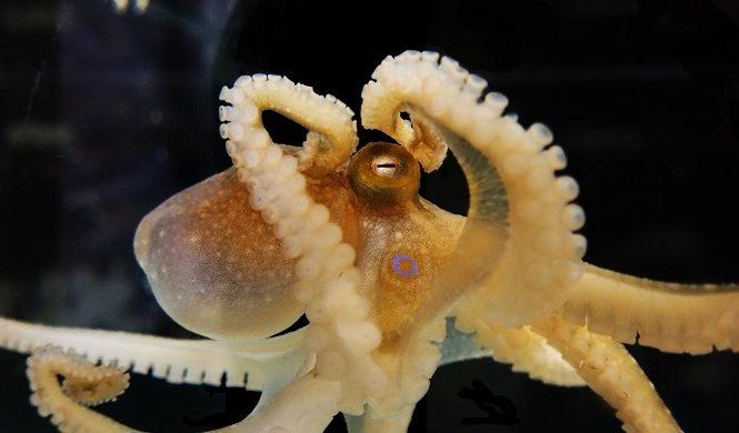 У осьминогов обнаружено инопланетное ДНК