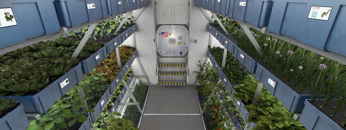 Космическое садоводство