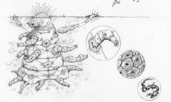 Астробиолог: Инопланетяне Похожи на Нас