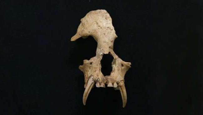 В древней китайской гробнице нашли вымерший вид приматов