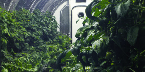 Какой будет космическая еда: в НАСА продолжают экспериментировать