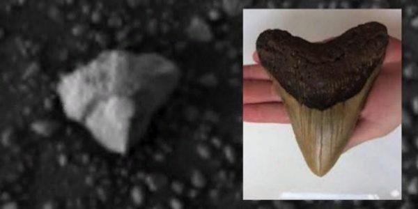На поверхности Марса найден зуб инопланетного существа исполинского размера