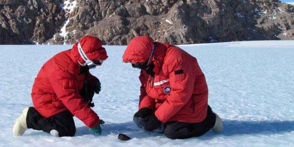 36 «пропавших» метеоритов нашли в Антарктике