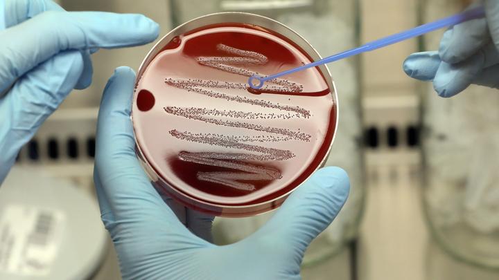 Учёные нашли способ победить супербактерии на МКС