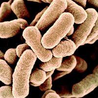 Ученые создали бактерии с синтетическим геномом. Это искусственная жизнь?