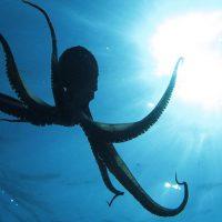 Безумное исследование тестирует научное сообщество, утверждая, что осьминоги пришли из космоса