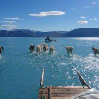 Ледяной покров Гренландии тает рекордными темпами