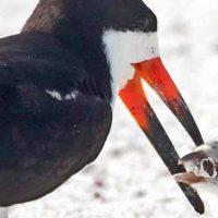 Душераздирающая фотография: птица, кормит своего птенца окурком