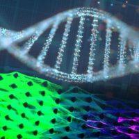 Машины, созданные на основе ДНК показывают признаки жизни - они могут есть и расти