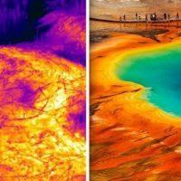 Йеллоустоун: деревья превращаются в уголь в новой термальной зоне