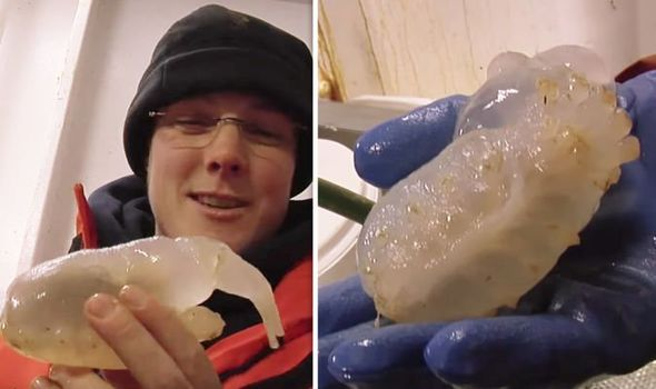 Инопланетная особь? Ученые нашли в Атарктиде неизвестное существо