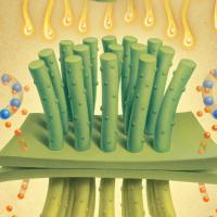 Ученые создали «искусственный лист», использующий солнечный свет для производства чистого синтетического топлива