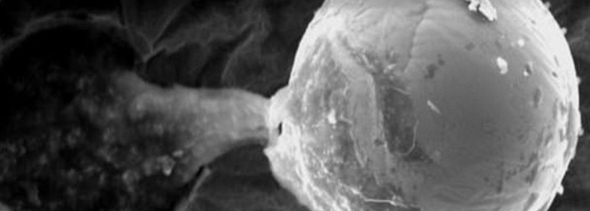 Еще одна возможная причина, почему мы никогда не видели инопланетных зондов: это крошечные микромашины