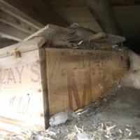 Антарктида: исследователи обнаружили «неожиданное сокровище», похороненное подо льдом