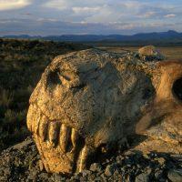 Шестое массовое вымирание началось? Вот факты