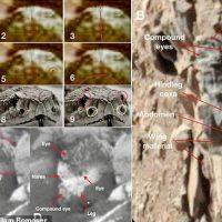 Американский энтомолог: На Марсе была и остается жизнь