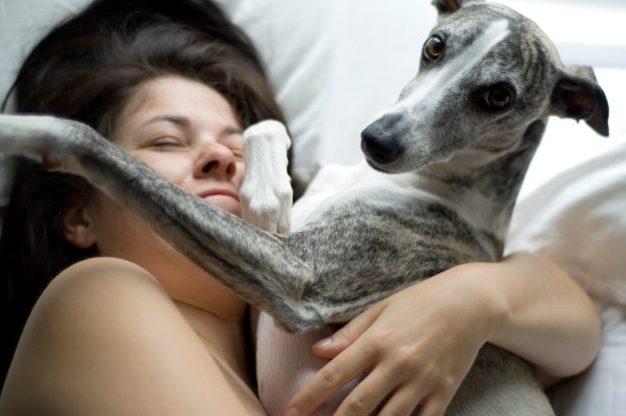 Вот как быстро ваша собака стареет — и нет, старое правило 7 к 1 неверно