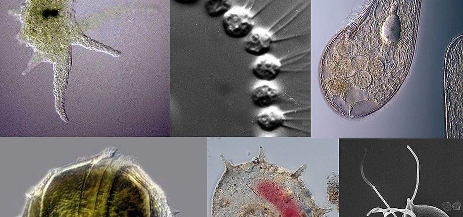 Изначальная форма жизни «Асгард» была успешно выращена в лаборатории