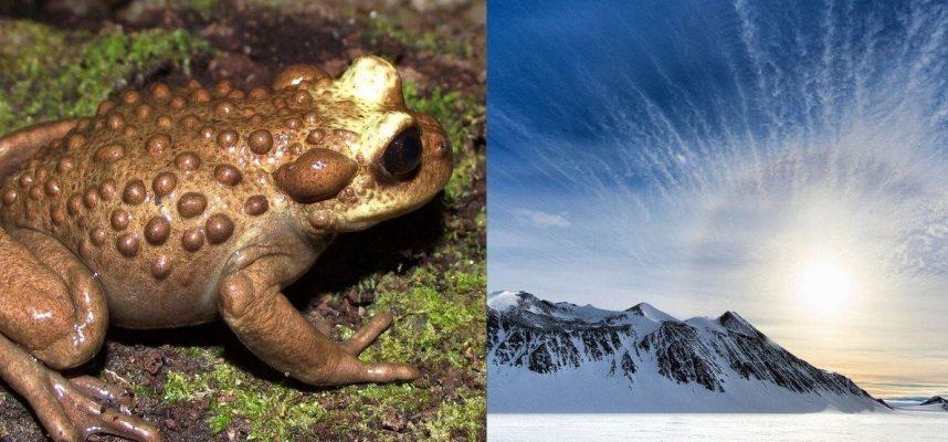 Ученые обнаружили в Антарктиде окаменелости южноамериканской лягушки