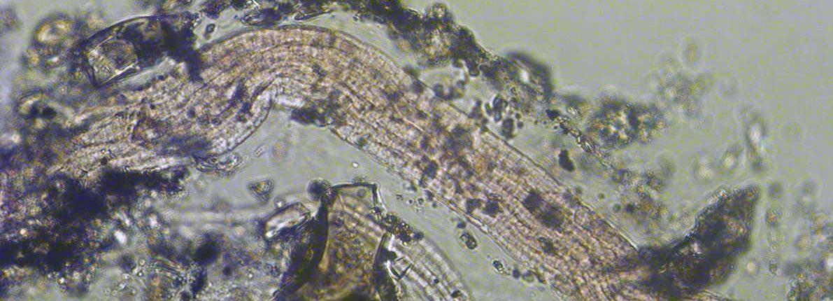 Новый вид метаболизма обнаружен у бактерий