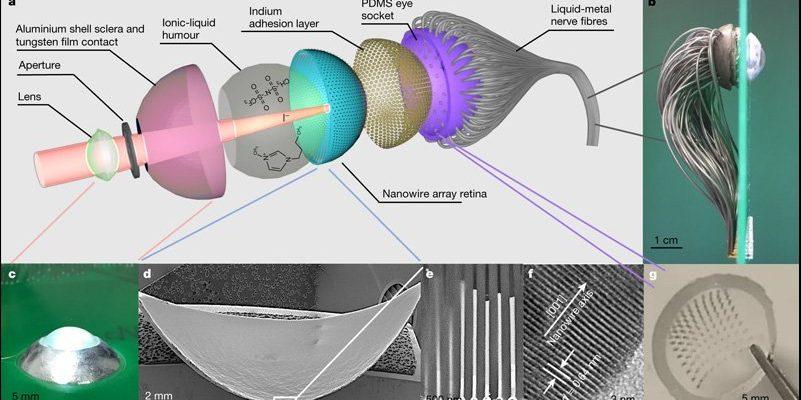 Ученые раскрывают доказательства концепции бионического человеческого глаза