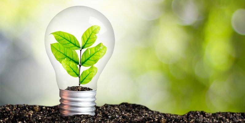 Ученые заявляют, что выяснили, как получить полезную энергию от растений