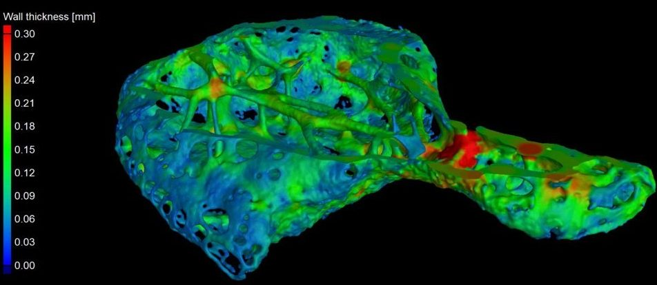 According to a recently published study, an amazing small bone was found in the heart tissue of several chimpanzees. The size of this mineralized tiss