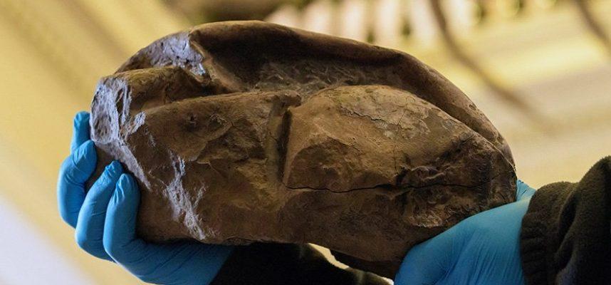 Ученые выяснили, что на самом деле представляет собой огромная окаменелость из Антарктиды