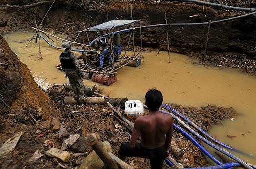 Рыба в реке Амазонка заражена — последствия незаконной добычи золота