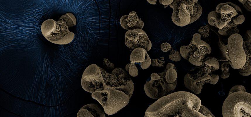 Ученые обнаружили бактерии питающиеся металлом