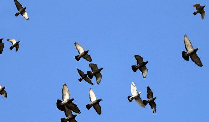 Инженеры создают четырехкрылые птицеподобные дроны