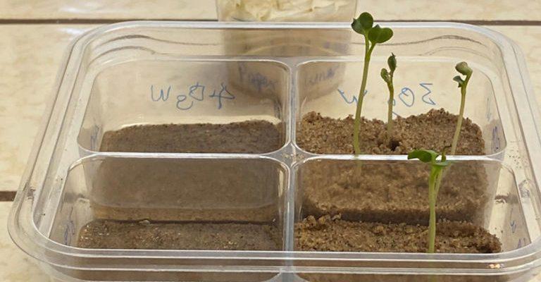 Эксперимент НАСА: редис может расти в лунном реголите