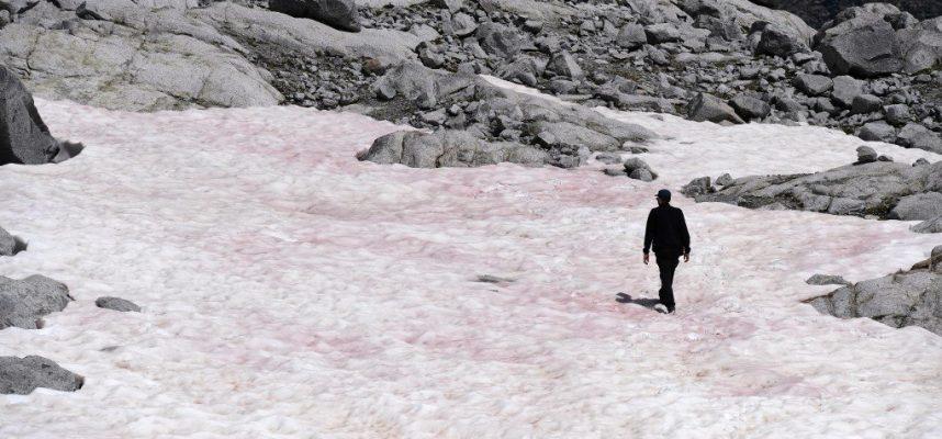 Появление розового льда в Альпах может иметь серьезные последствия