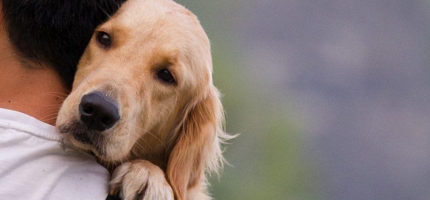 Ученые показывают, как рассчитать «человеческий» возраст собаки, а он не кратен 7