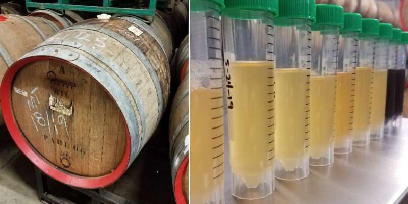Достигнут небывалый прогресс в производстве кислого пива