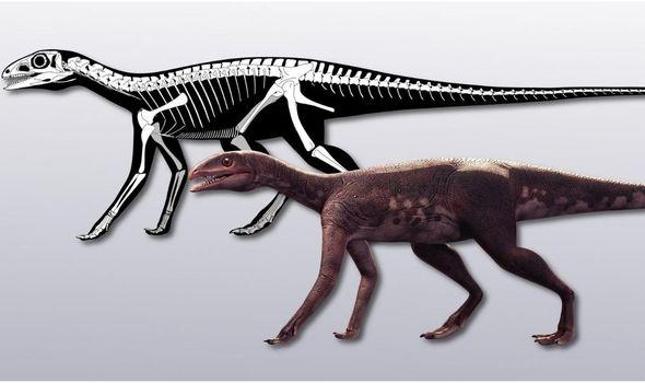 Недостающее звено: археологи изучили малоизвестных динозавров размером с собаку