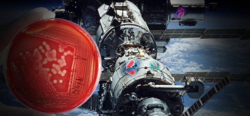 Бактерии за пределами МКС годами выживали в космическом вакууме