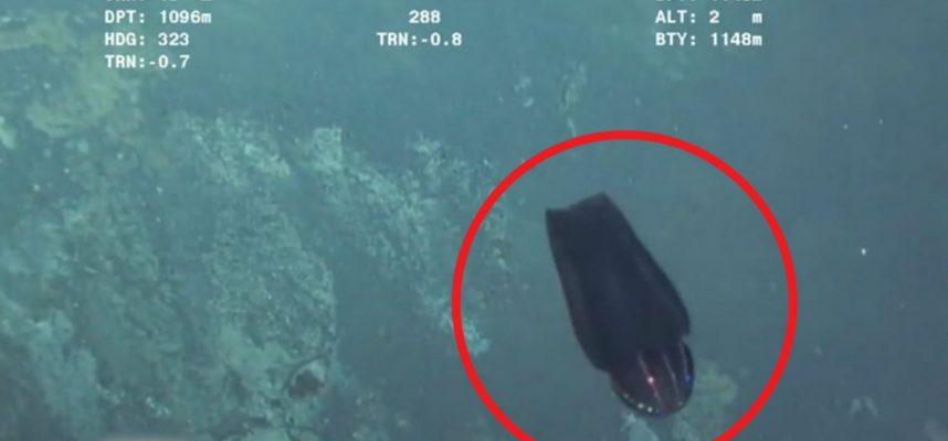 «Инопланетное» существо трансформируется у дна океана. Видео с глубоководного зонда