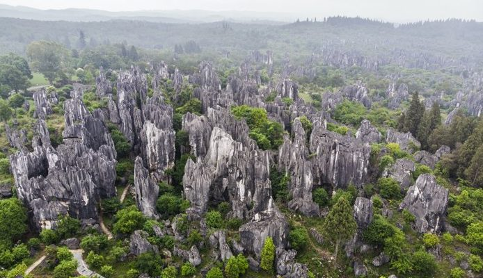 Ученые выяснили, как «каменные леса» развивают свои потусторонние формы