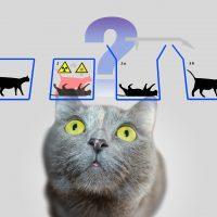 Что такое кот Шредингера?
