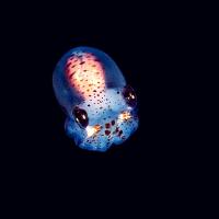 НАСА запустит в космос эмбрионы кальмара и 5000 тихоходок